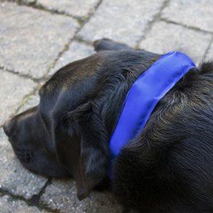 Britedoggie Icy Collar